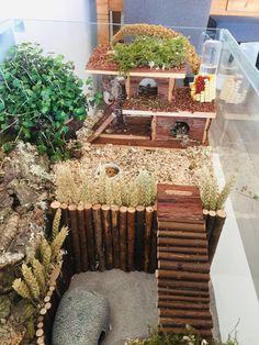 Teddy Hamster, Dwarf Hamster Cages, Hamster Bin Cage, Cool Hamster Cages, Gerbil Cages, Hamster Life, Hamster Habitat, Syrian Hamster, Pets