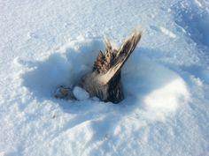 We found this strange, moving package in the snow. What is this? When coming closer we saw it was a bird. What to do?