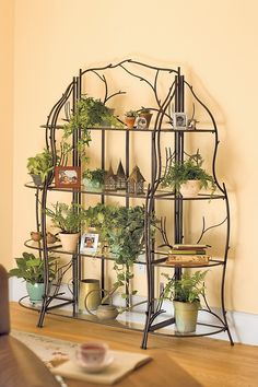 1000 Images About Indoor Plant Stand On Pinterest Plant