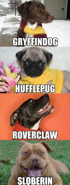 funny-dogs-Harry-Potter-houses-Gryffindor