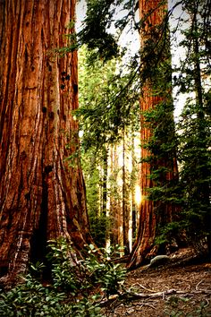 Or pass through the redwood forest just as the sun was going down?