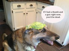 german shepherd funny pictures Memes | Click image for larger versionName:jakelettuce.jpgViews:8978Size:54.7 ...