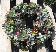 Make Your Own Wreaths | Make your own Succulant Wreath