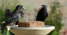 Házilag is készíthetünk madáreleséget, ez pedig sokkal jobb és olcsóbb megoldás, mint a boltban kapható madáreleség. Nézzük, hogyan készül ízletes madáreleség. Bird, Animals, House, Push Away, People, Animales, Animaux, Home, Birds