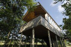 Baumhaus   Stufen Führen In Ein Luftiges Domizil