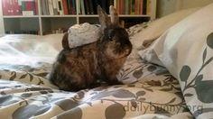 Bunny has a tiny backpack - February 12, 2015