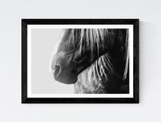 Horse photography Horse Photo Horse print Black and White