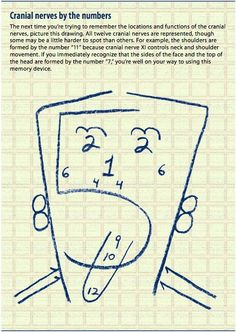 Cranial nerves to memory. did well on my exam because of this!