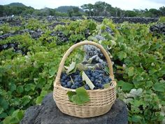 Vineyards on the Pico island, the Azores. Vinhas do Pico Porto Portugal, Visit Portugal, Portugal Travel, Spain And Portugal, Portuguese Culture, Portuguese Food, Wine House, Douro Valley, Pubs And Restaurants