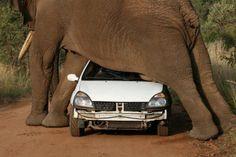 planking-zuid-afrika