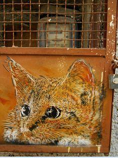 Street Art by Christian Guémy Cool kitty