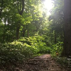 Escape stress and schedules on a trail at John James Audubon State Park in Henderson, Kentucky #AudubonPark #StatePark #NAture #History #Forest