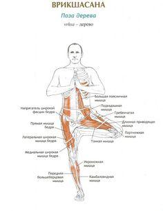 Врикшасана (ПОЗА ДЕРЕВА) http://yogajournal.ru/body/practice/home-practice/5-preimushchestv-pozy-dereva/