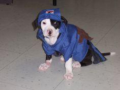 Halloween 2012 @League for Animal Welfare (LFAW)   Cutest mailman ever !