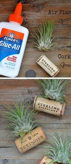 Air Plant Wine Cork Magnets - DIY Crafts for the Home - Click for Tutorial #winecorkcrafts #winecorks