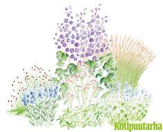 PASTELLIA PUUTARHAAN. Pihan romanttinen kohta syntyy pastellinsävyisillä perennoilla. Herkkä istutus sopii sekä aurinkoon että puolivarjoon. Istutuksen kasvit: Koristekastikka (Calamagrostis x acutiflora), isoritarinkannus (Delphinium x cultorum Elatum-Ryhmä), isotähtiputki (Astrantia major), lehtosinilatva (Polemonium caeruleum), loistotädyke (Veronica austriaca), hurmeluppio (Sanguisorba menziesii).