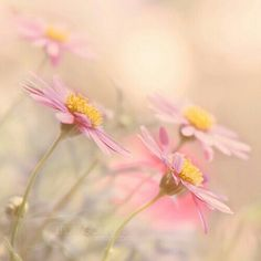 in your warm arms by ivadesign on DeviantArt Pastel Photography, Yellow Cottage, Happy Paintings, Flower Images, Color Of Life, Pretty Pictures, Spring Flowers, Beautiful Flowers, Delicate