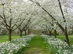 Allee of trees in Spring Landscape Architecture, Landscape Design, Garden Design, Spring Landscape, Back Gardens, Outdoor Gardens, Beautiful Landscapes, Beautiful Gardens, Orchard Design