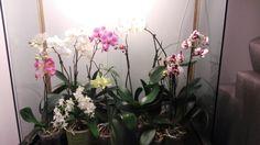 Orchidearium hand made