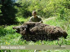 Wild boar hunting in Turkey http://riflescopescenter.com/category/bushnell-riflescope-reviews/