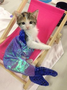 MostlyCatsMostly - Purrmaid (via Jackie Noble) Cat 2, Dog Cat, Mermaid Cat, Funny Animals, Cute Animals, Eccentric Style, All About Cats, Kittens, Kitty Cats