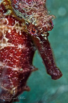 Giant seahorse! by wendymd, via Flickr