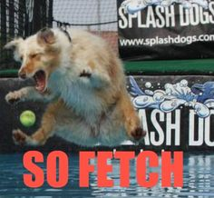 ...Stop trying to make fetch happen.