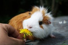 yummy a flower......so cute