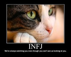 INFJ (Myers Briggs personality) This just made me laugh! :) (And the cat's eyes are beautiful!)