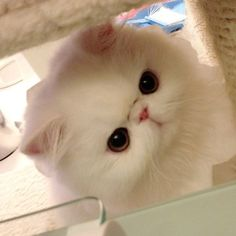 mau kucing iniii