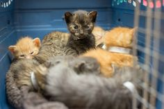 Surrogate Cat Mom Takes in 14 Hungry Kittens and Saves Their Lives...