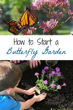Rose Gardening Tips and resources for starting a small butterfly garden at home - Want to attract butterflies to your yard and watch caterpillars turn into butterflies? Check out these tips and resources for planting a butterfly garden.