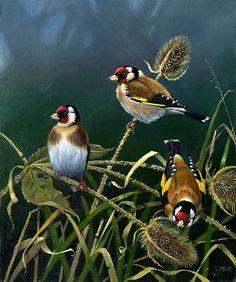 Gold Finches by Bird Artist Peter Cotton