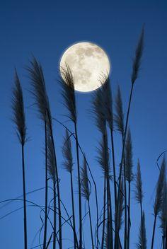 Nice Full Moon Photo