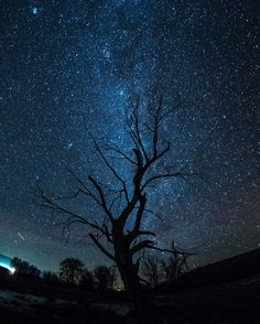 stars over lostine tree. wallowa county. oregon. -