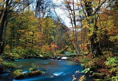 Wood River, Walking In Nature, North Shore, 3d Wall, Wall Murals, World, Wallpaper, Gallery, Places