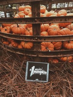 Autumn Adventures - 🎃it's always Halloween inside my head 🎃 Fall Pictures, Fall Photos, Fall Images, Autumn Cozy, Autumn Fall, Autumn Leaves, Autumn Aesthetic, Mini Pumpkins, Happy Fall Y'all