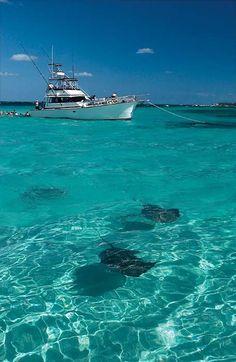 Meet the inhabitants of Stingray City and its neighbor, Stingray Sandbar. Cruise Destinations, Vacation Places, Cruise Vacation, Best Vacations, Away We Go, Close Encounters, Shore Excursions, Grand Cayman, Cayman Islands