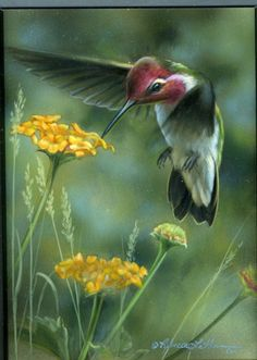 Paintings by international wildlife artist Rebecca Latham. Featuring North American animals, birds, & nature in watercolor painted in miniature. Pretty Birds, Beautiful Birds, North American Animals, Hummingbird Art, Tier Fotos, Wildlife Nature, Bird Illustration, Bird Pictures, Little Birds