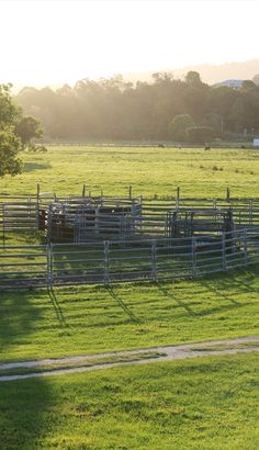 EXPLORE Green Pastures At Husk Distillery Tumbulgum Northern NSW Typical View Of