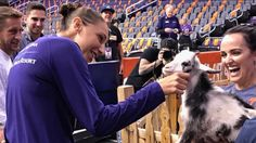 The Phoenix Mercury brought a goat petting zoo into Talking Stick Resort Arena to honor Diana Taurasi's recently becoming the WNBA's all-time leading scorer.