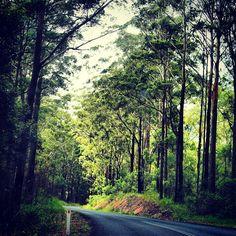 Road trip - green, lush, aussie bush