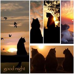 Kitty sunsets ✨ Good Night My Friend, Good Morning Good Night, Good Night Quotes, Day For Night, Night Time, Color Collage, Beautiful Collage, Good Night Sweet Dreams, 1920s Art Deco