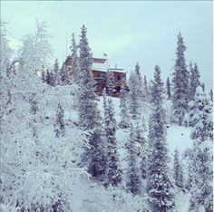This secluded Yellowknife gem has been in operation since Owner operated, is run by Yellowknife-resident Mike Freeland. Visit our website for more great stories. Wilderness Resort, Las Ve, Customer Stories, Big Picture, Canada, Business, Spotlight, Gem, Outdoor