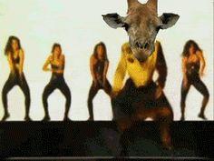 m.c. giraffer