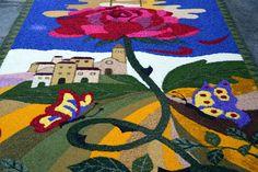 Flowers Spello - Umbria