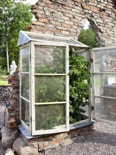 I LE: Mindre hardføre planter står i drivhuset, som er bygd av fem gamle vinduer og en sinkplate. Akkurat nå vokser tomater og chili her.