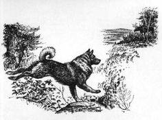 Norwegian Elkhound Print - Raymond Pease