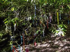 Ribbon tree at St. Nectan's Glen, near Tintagel, Cornwall. Photo by Shane Broderick, used with permission