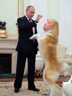 Trump is controlled by Vladimir Putin Putin Badass, Trump Idiot, Trump Funny, Putin Trump, Donald Trump Quotes, Trump Picture, Trump Cartoons, Levi X Eren, Stupid Funny Memes